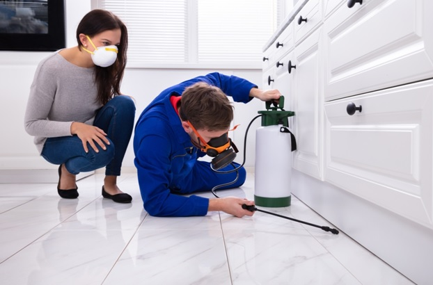 Easy Ways to Prevent Termite Infestation at your Home