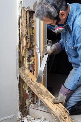 5 Easy Ways to Prevent Termites from Spreading in Home